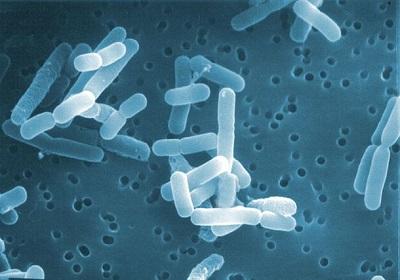 ロイテリ菌配合の商品には様々な種類とその効果【ガム・ヨーグルト・歯磨き粉など】