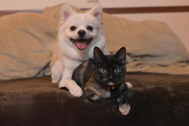 犬や猫にもロイテリ菌は効果があるのか調査しました!